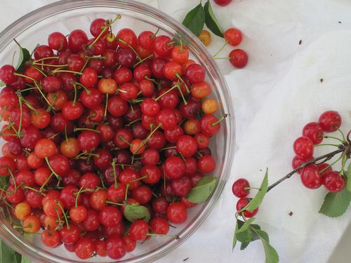 Sour cherry surprise