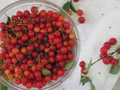 Sour cherry surprise