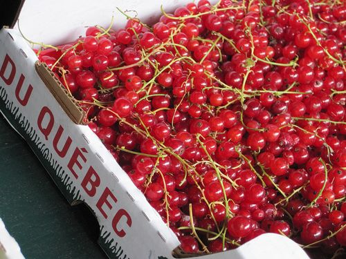 Montreal Fresh Red Currants